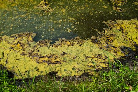 sump: Closeup of algae in water in Thailand