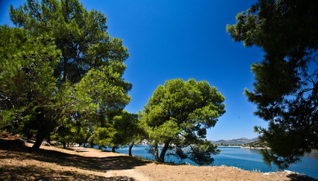 mediteranean: Trees at the coast line in   Peloponese in Greece