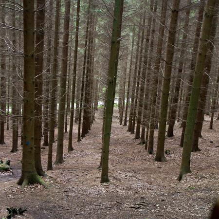 symetry: Landscape forest in denmark in the summer