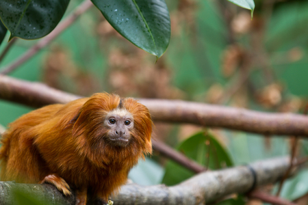 pelage: Zoo animals in copenhagen Denmark
