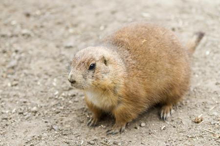 pinniped: Zoo animals in copenhagen Denmark