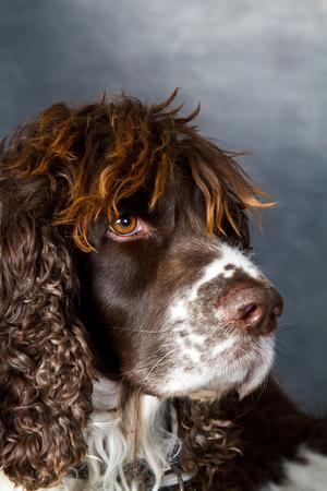 inddor: dog shot inddor in studio Stock Photo