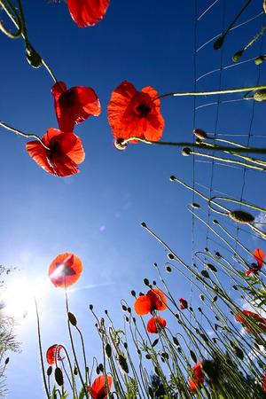 Nature and flower in denmark scandinavia in spring Stock Photo