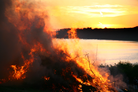 Controlled fire of trees and branches Imagens