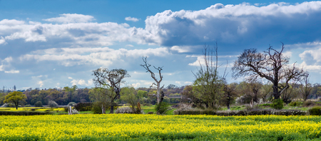 Farmland in the Essex countryside in the spring, with rapeseed crop in bloom and dramatic sky Stock Photo