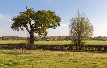 essex: Two trees in the autumnal Essex countryside Stock Photo