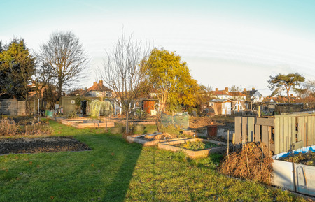 Allotments are small plots of land which are rented and then cultivated with vegetables.