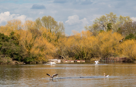 stomy: Springtime shot in the late afternoon of the lake at Hainault Forest in Essex and shows wildlife on the lake.