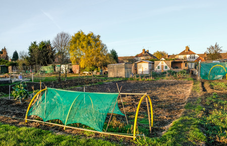 Allotment is a small plot of land which is rented and you can grown your own vegetables.  Its a social life and a community of like minded people.  This is an autum shot and the plots are quite empty. Stock Photo