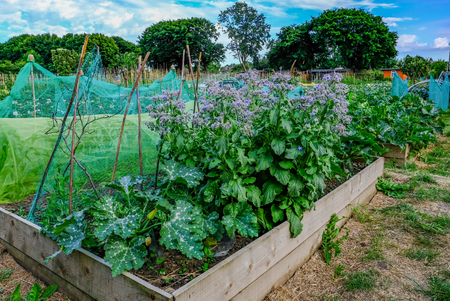 Planter box with vegetables growing in the Community garden. Stock Photo