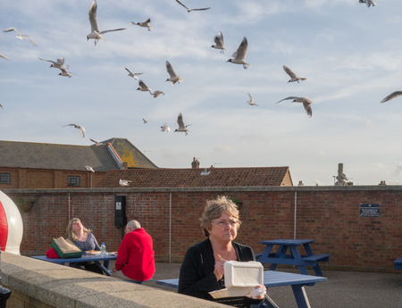 Norfolk, UK - April 26, 2014:  People eating their lunch outdoors and being attacked by seagulls.
