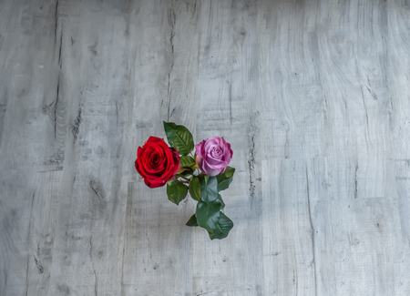Flatbed shot of two blooming roses on a grey wooden background.  Graphic resource shot with space all around the central roses.