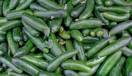 Small green slicing cucumbers at the market.  Cruchy and firm ready for salads. Reklamní fotografie