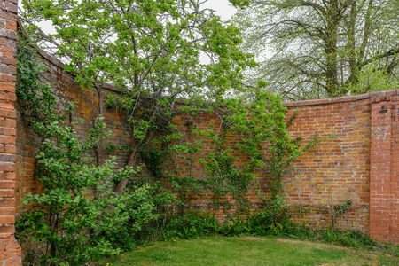 Curved ancient red brick wall with trees and shrubs growing beside it.  The wall is high and is well weathered.