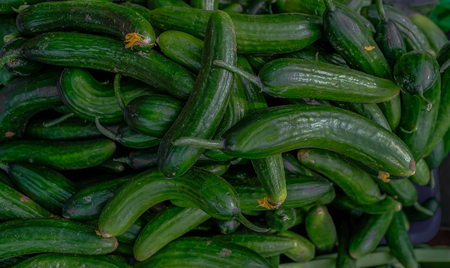 Selection of green small cucumbers on sale at a farmers market.  Closeup shot of the small fresh vegetables.