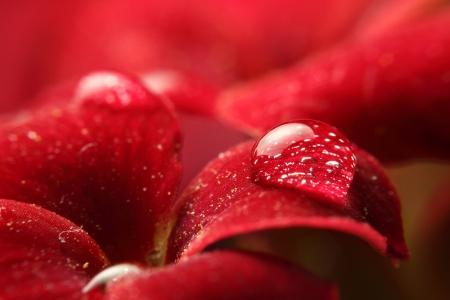 Flower Drop Red