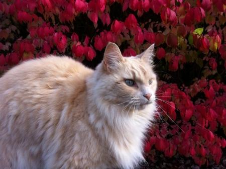 cat in a beautiful autumn day