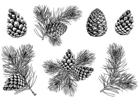 Black and white pine branches and cones. Hand drawn vector illustration. Isolated elements for design.