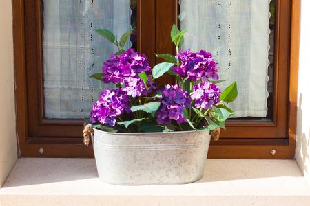 Purple Hydrangea in a flower pot on a window sill Stock Photo
