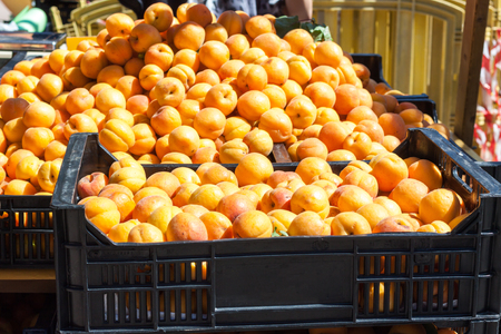 Bright orange apricots in two boxes for sale on Apricot Fair in Porreres, Mallorca, Spain Stock Photo