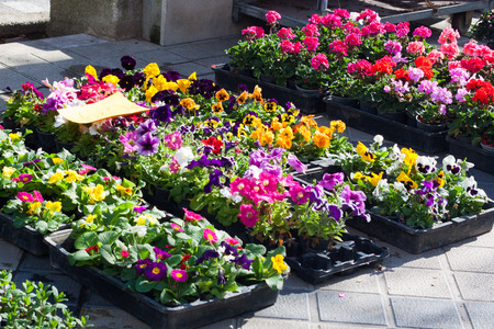Flowers for sale at a local market in Esporles, Mallorca, Spain Stock Photo
