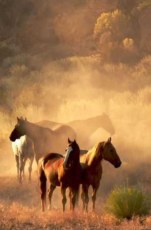Four horses standing in the desert in evening light