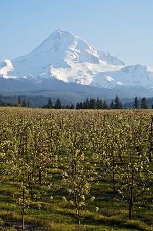 View of Mt Hood in Spring photo