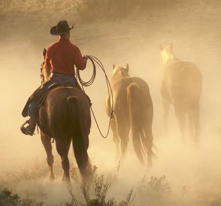 cowboy on horse: cowboy bringing in the herd Stock Photo