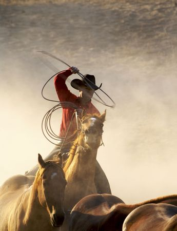working cowboy: cowboy catching horses in the desert