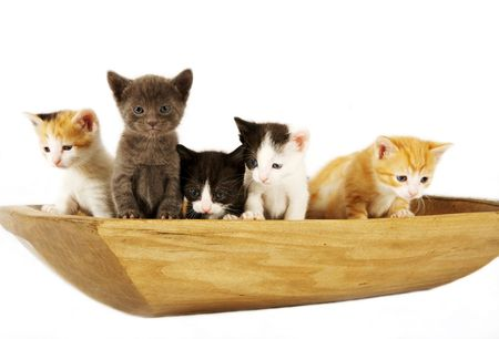 cute kittens in a wooden bowl