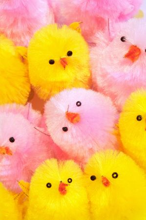 bunched: Cute little yellow and pink easter chicks bunched together looking upward