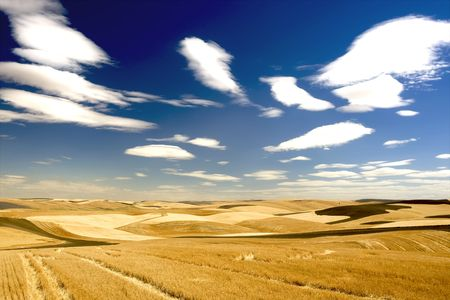 Checkered landscape of wheat, barley, lentil, gabanzo farm land Stock Photo - 3392713