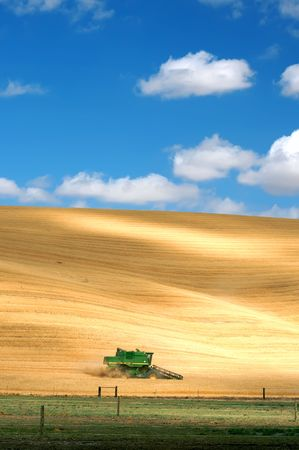 One Combine Harvesting Wheat Banque d'images