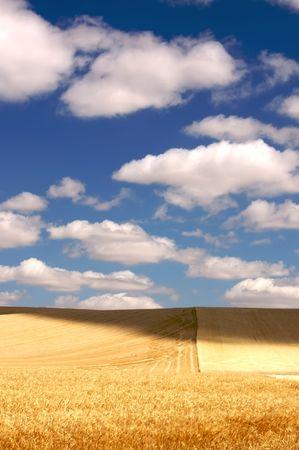Golden Wheat Field in the Palouse Region, Washington, USA Stock Photo - 3392716