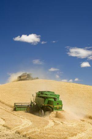cosechadora: Dos combina la cosecha de trigo