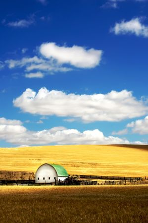 Barn in the mist of a wheat field under a puffy cloud blue sky