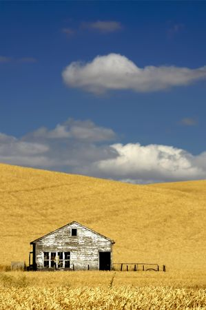 Olld House in the mist of a wheat field under a puffy cloud blue sky