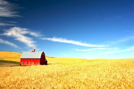 Red Barn in the mist of a wheat field under a puffy cloud blue sky Фото со стока
