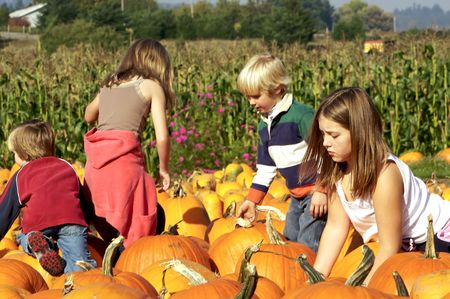 Cute kids looking for just the right pumpkin at the pumpkin patch