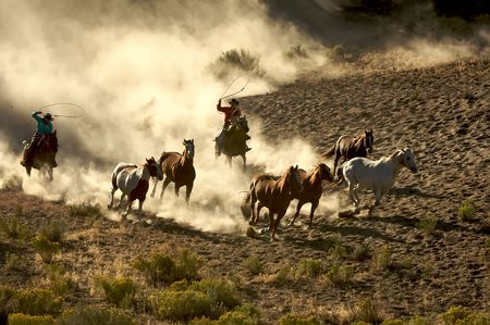 pursue: Cowgirl and Cowboy galloping and roping wild horses through the desert
