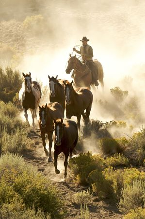 Single cowboy guiding   horses through a dusty desert Banque d'images