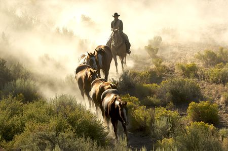 Single cowboy guiding horses through the desert Banque d'images