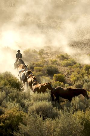 Single cowboy guiding a line of horses through the desert Stock Photo
