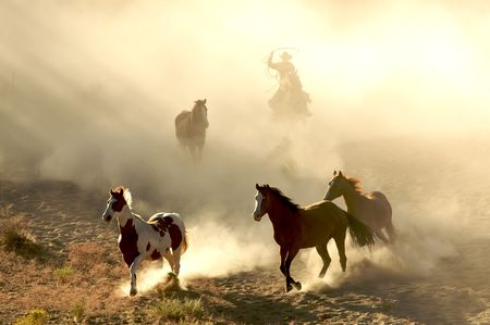 herder: Sunlight Horses and cowboy galloping and through the desert Stock Photo