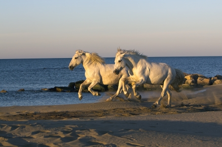 Two Horse running down the beach