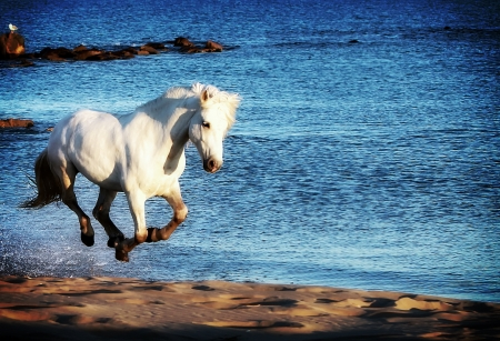 White horse running along the sea shore