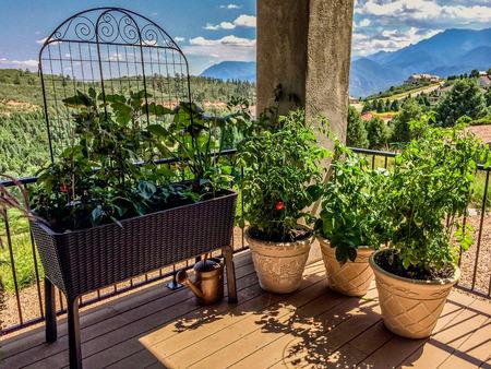 Container garden on deck in mountains of Colorado