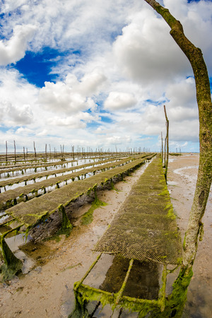 oyster park in the center of the Arcachon basin on the island with birds