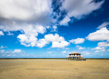 beautiful black wood house on stilts in the basin of Arcachon on the island with birds