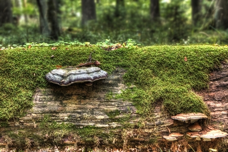 lies down: old fallen tree covered with mushrooms and moss Stock Photo